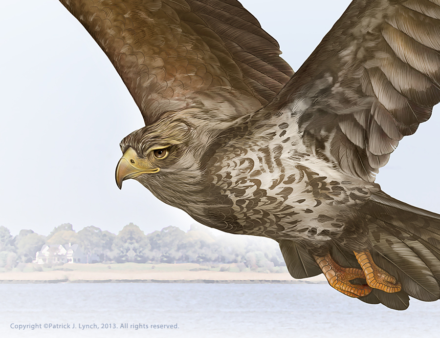 Detail of a painting of a juvenile Bald Eagle.