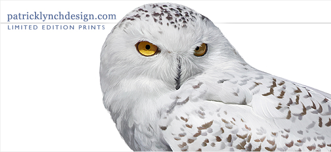Limited edition prints by Patrick Lynch, with image of a snowy owl painting.