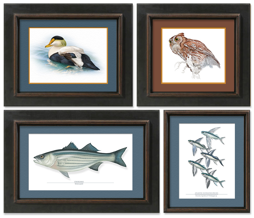 Graphic of four illustrations in frames.