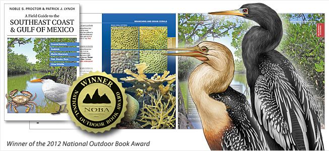 """Images from the book """"A Field Guide to the Southeast Coast & Gulf of Mexico."""""""