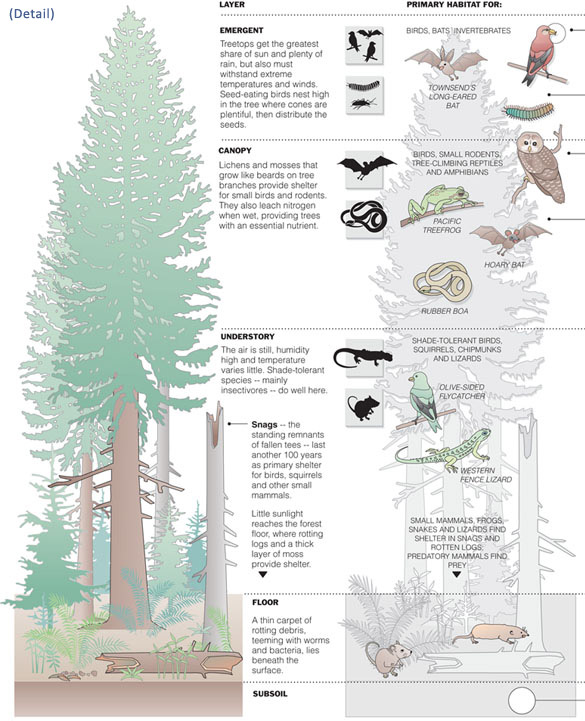Megan Jaegerman forest wildlife diagram (detail of a portion of the diagram).