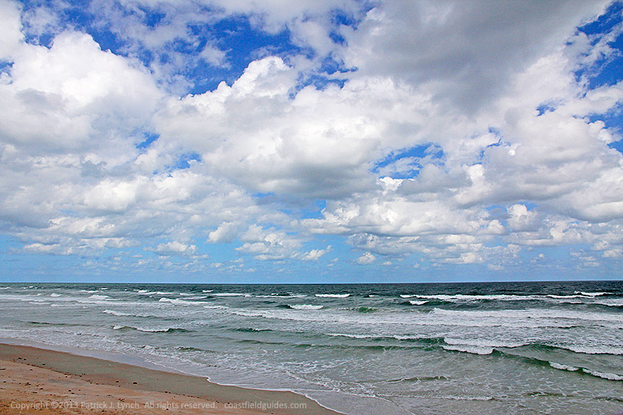 Photo of the beach and surf at Cape Canaveral National Seashore, Florida.