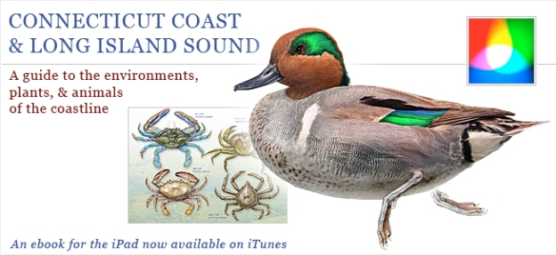 Cover image of ebook on the Connecticut Coast & Long Island Sound.