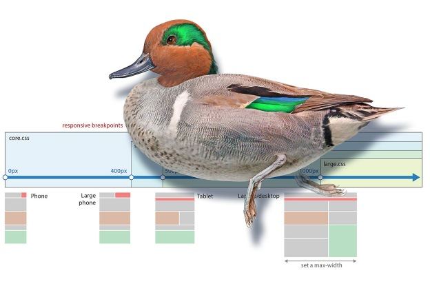 Green-winged Teal painting, with a RWD breakpoint diagram.