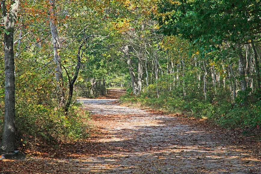 The main trail at Bluff Point State Park, Groton, CT.