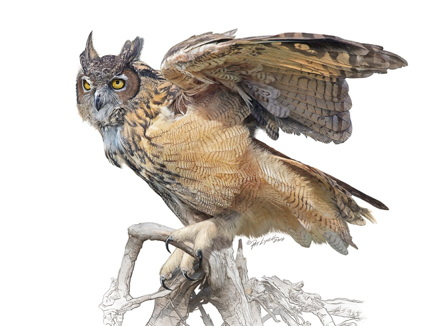 Great Horned Owl. Photoshop illustration. ©Patrick J. Lynch, 2017. All rights reserved.