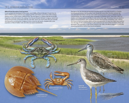 The new Horseshoe Crab Reserve at Milford Point, CT.