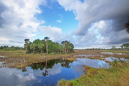 Salt marsh, Merritt Island National Wildlife Refuge, FL. ©Patrick J. Lynch, 2017. All rights reserved.