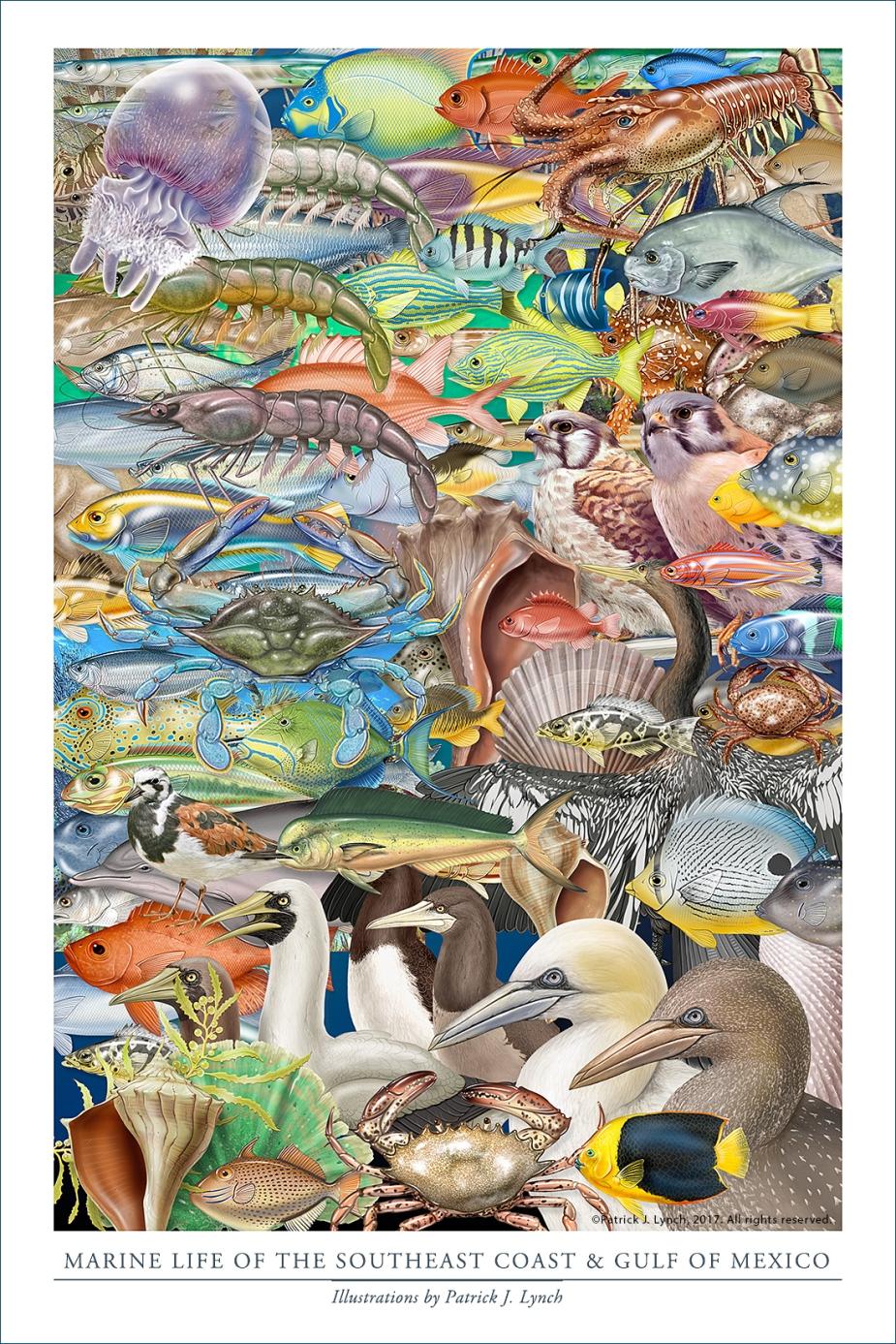 se-marine-life-poster-12x18