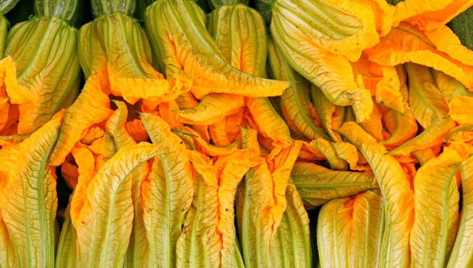 zucchini-flowers-lynch