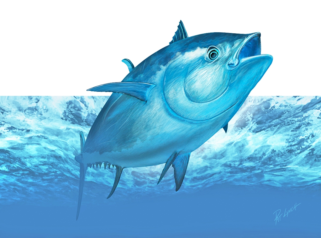 Atlantic Bluefin Tuna illustration by Patrick J. Lynch.