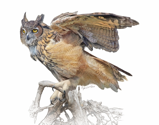 Great Horned Owl illustration by Patrick J. Lynch.