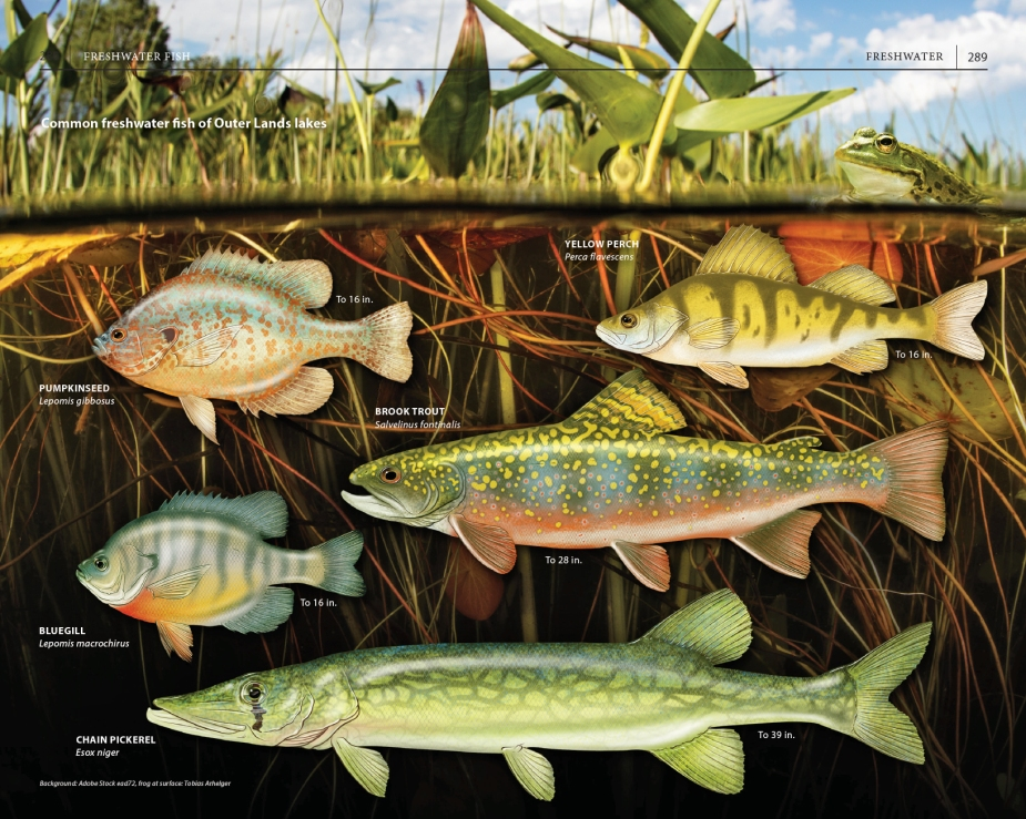 "Page spread on freshwater fish species, from ""A Field Guide to Cape Cod."""