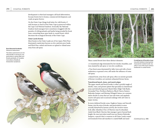 """Page spread on coastal forests, from """"A Field Guide to Cape Cod."""""""