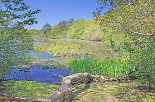 Blackwater Pond, in the Beech Forest area of the Provincelands.