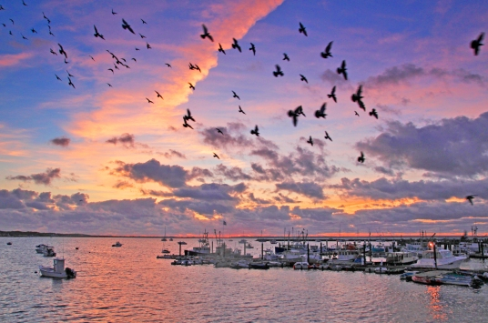 Photograph of the harbor at Provincetown, Massachusetts, at dawn.